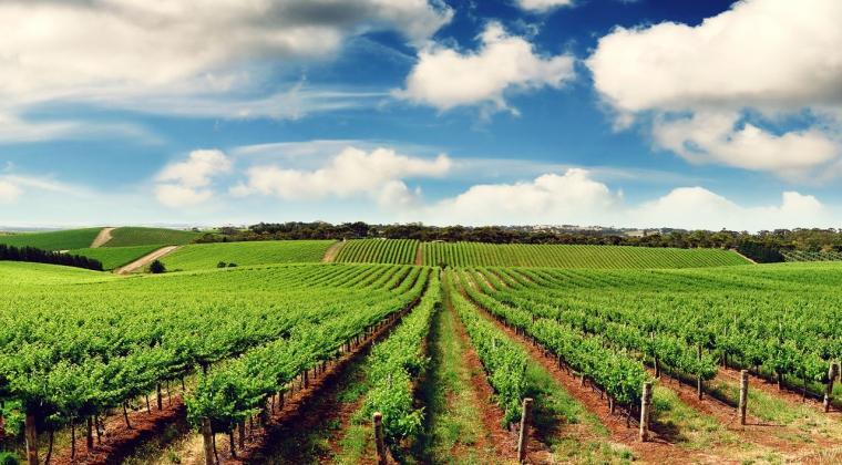 Kerjasama Pertanian & Zakatnya