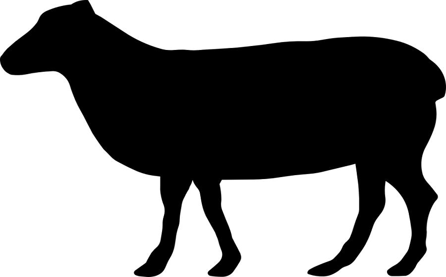 Qurban satu ekor sapi dengan anak-anaknya. Istri saya bilang ikut disana saja qurbannya. Cuma saya merasa seperti tidak berqurban kalau saya tidak ....
