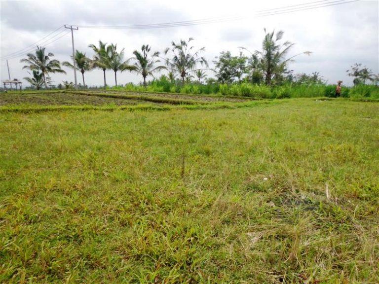 Suami Menjual Tanah Istri Yang Pikun Untuk Amal Jariyah