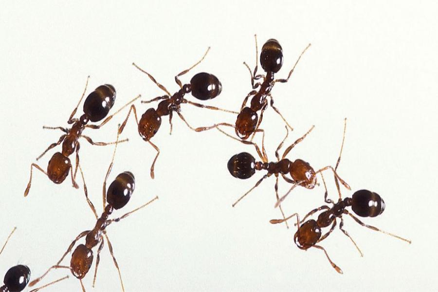 Membunuh Binatang Kecil Seperti Semut
