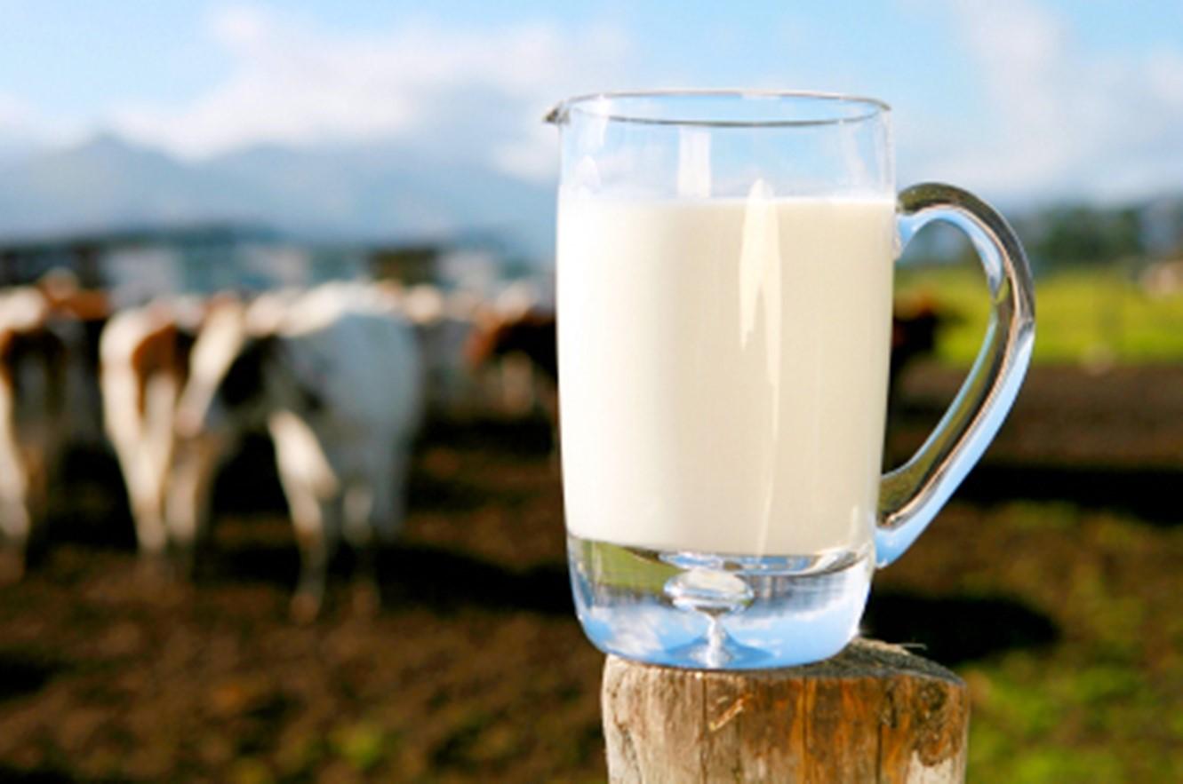 Hukum Meminum Susu Pada Bangkai Kambing