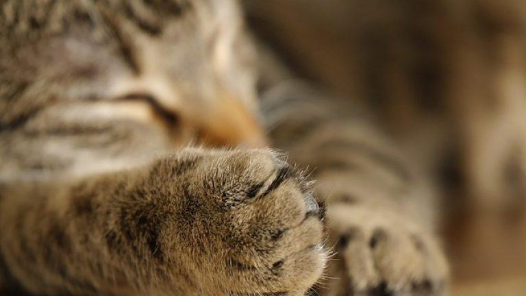 Menyikapi Kucing Milik Tetangga yang Mengganggu