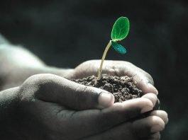 Bolehkah Wakaf Dengan Uang yang Akan Dibelikan Tanah bimbingan islam