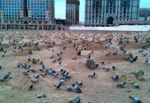 Membatasi Makam Dengan Keramik dan Menanam Rumput, Apakah Terlarang bimbingan islam