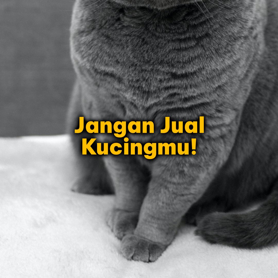 Stop, Jangan Jual Kucingmu