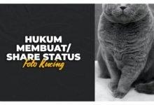 Hukum Membuat Share Status Foto Kucing
